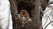 winter owl, New Jersey