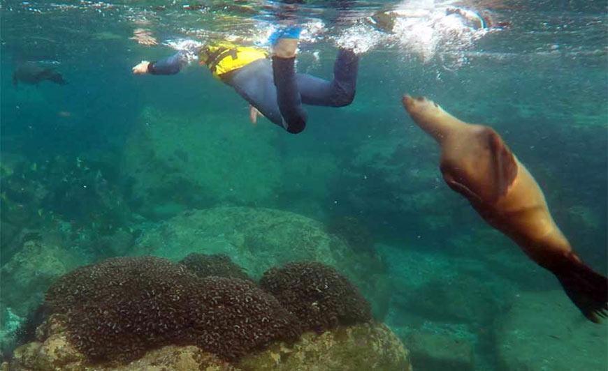 Swimming at Baja Sur
